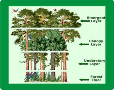 Physical Landscape, Habitat and Climate - The Tropical Rain Forest